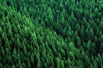 Aerial view of responsibly managed forest