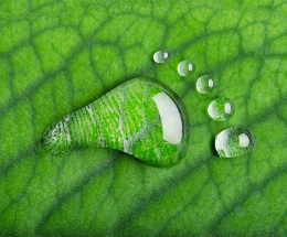 Water footprint on leaf