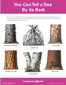 LifeForestBark